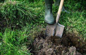 Подготовка ямы осенью для посадки яблони весной