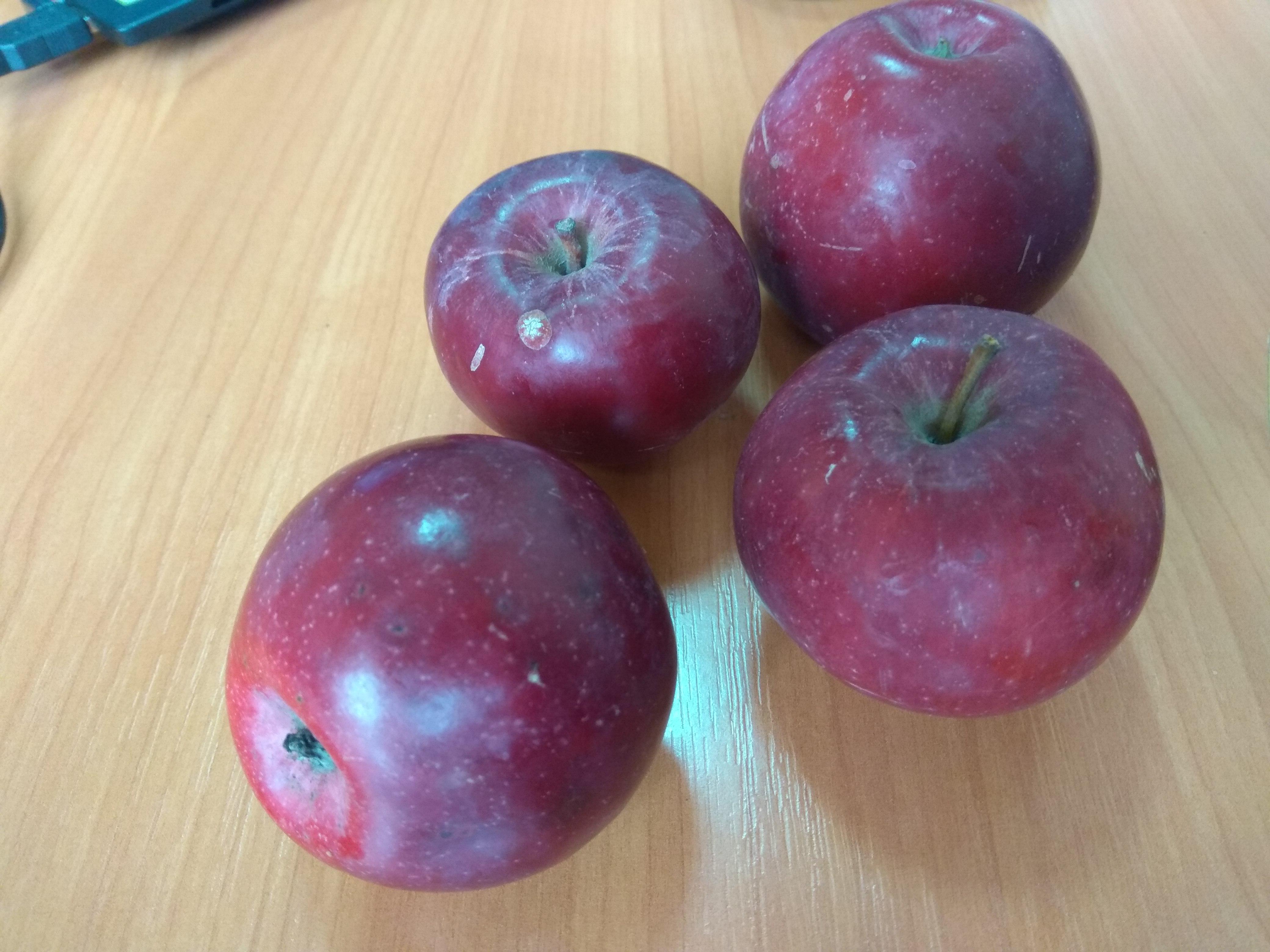 ходе определитель сорта яблок с фото неухоженных